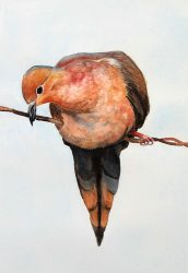 Mourning Dove by Roberta Loflin