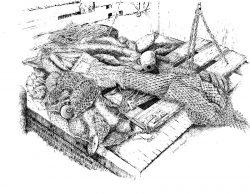 Shrimp_Nets